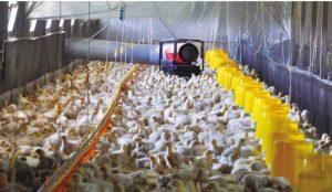 Farm-heater